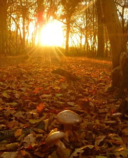 If you go down to the Wood on Saturday…Poulton Wood Open Day