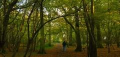 Seeking volunteers for Poulton Wood